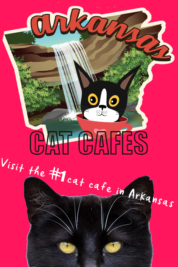 Arkansas Cat Cafes