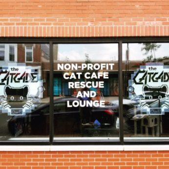 CatCade, Chicago Cat Lounge