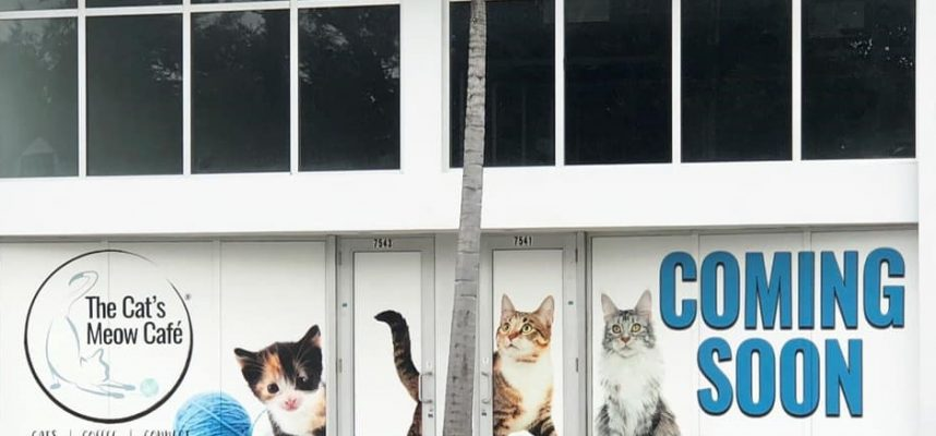 Cat's Meow Cafe