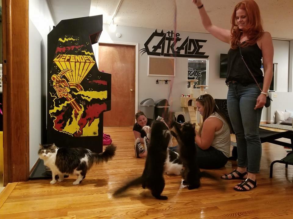 CatCade