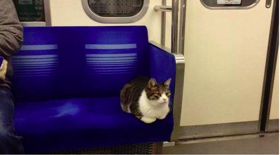 Tokyo Subway Cat