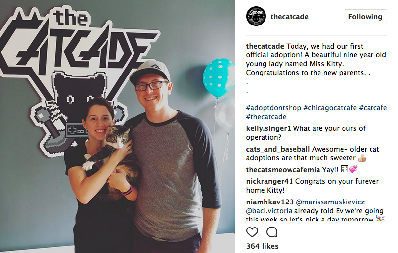 CatCade Cat Adoption