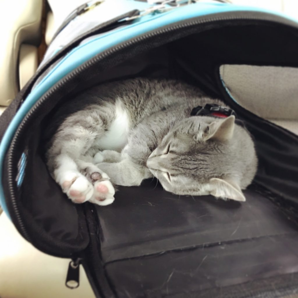 Travel Cat Karlie