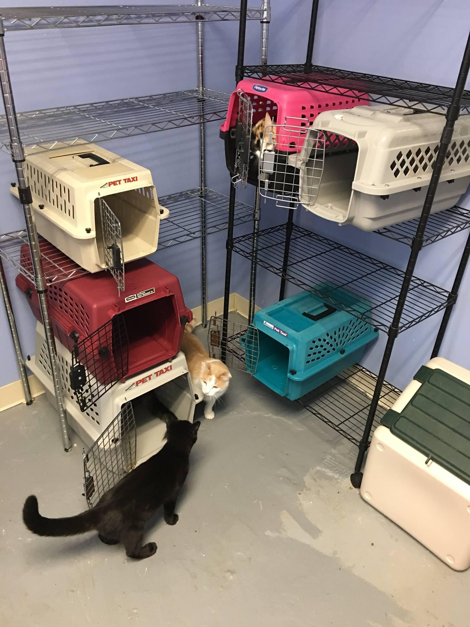 Hurrican Irma Pets