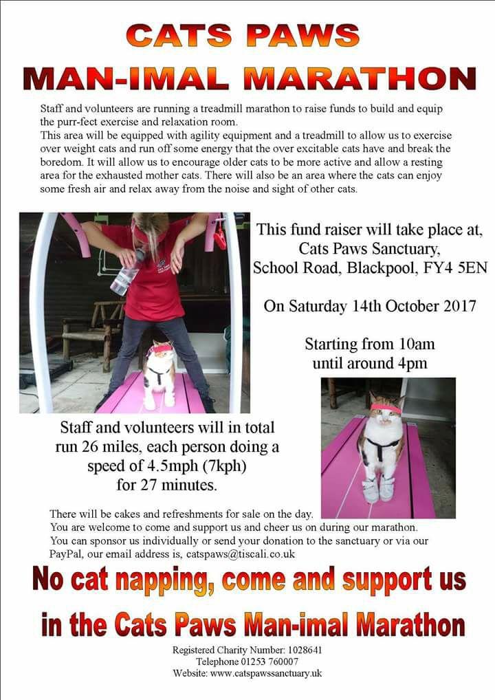 Cat Paws Cat Event