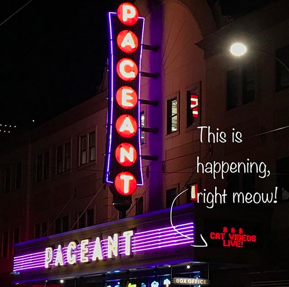 Cat Videos Live at Pageant