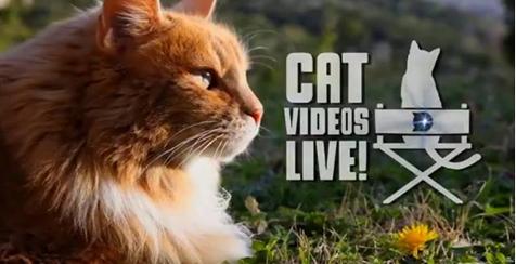 Cat Videos Live