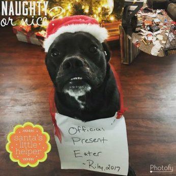 Santa's Naughty Pet List