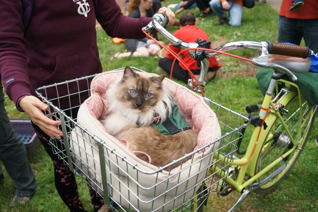Portland First Caturday