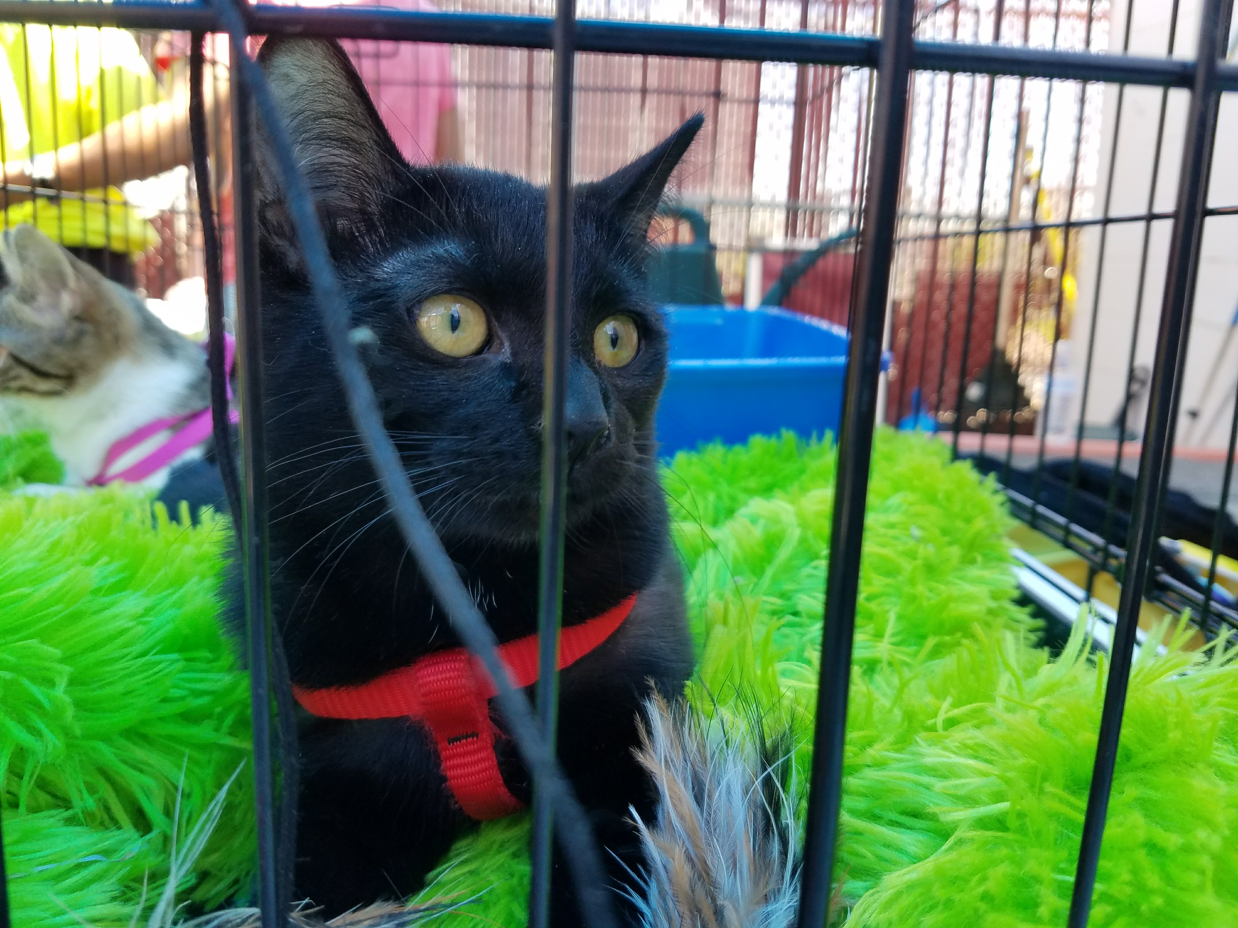 Pick Me! Cat Adoption