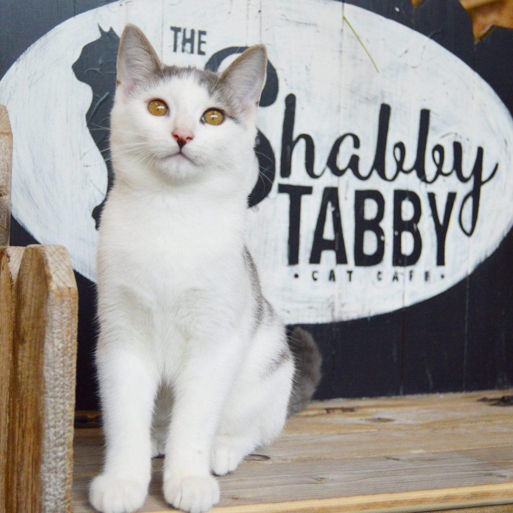 Shabby Tabby Cat Cafe
