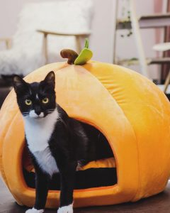 Halloween at Tally Cat Cafe