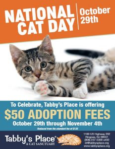 National Cat Day: Tabby's Place