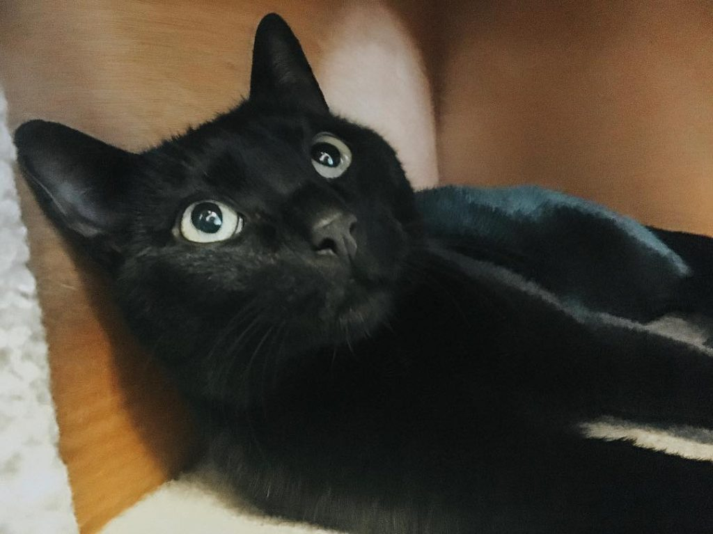 Cat at Nine Lives Cat Cafe