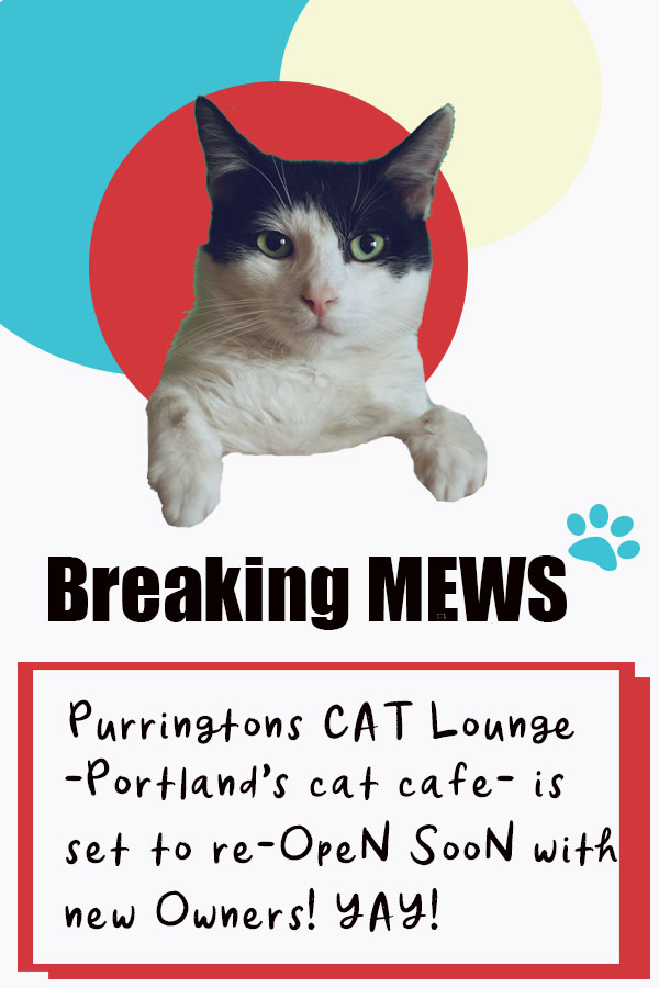 Breaking Mews!! You've missed your chance to own one of America's coolest small businesses. Portland's only cat cafe has new ownership and set to re-open in the same location soon!