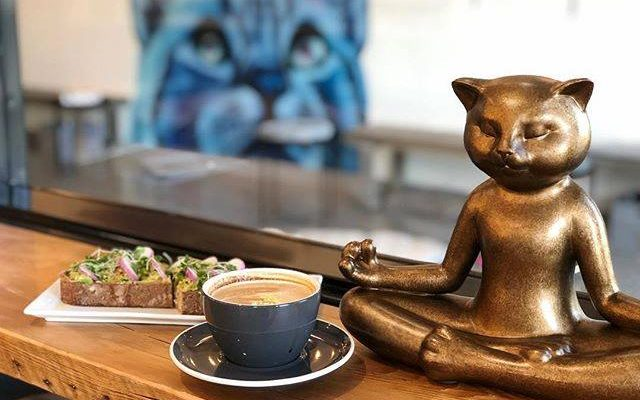 San Diego County Cat Cafe
