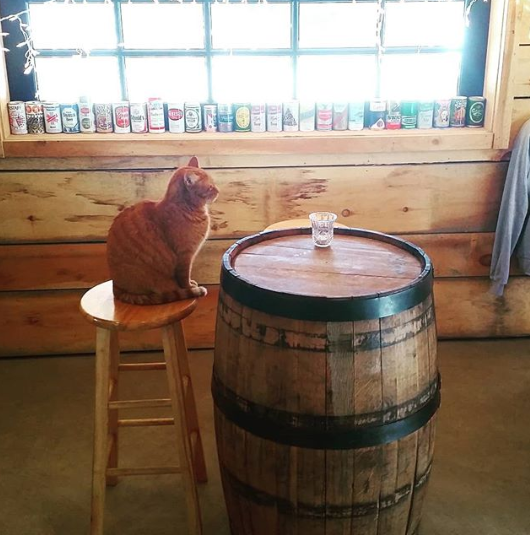 Dizzy the Oxbow Brewing Company Cat