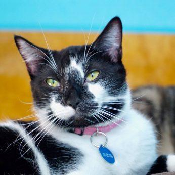 Crescent City Cat Club Cat