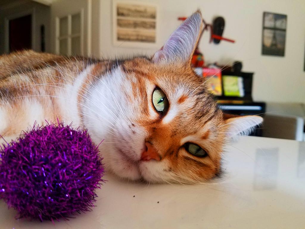 Indoor Cat Life