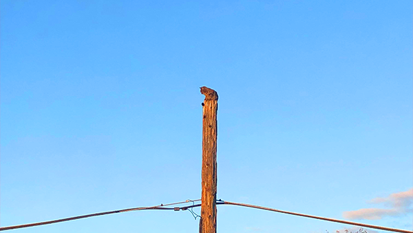 Cat stranded on telephone pole