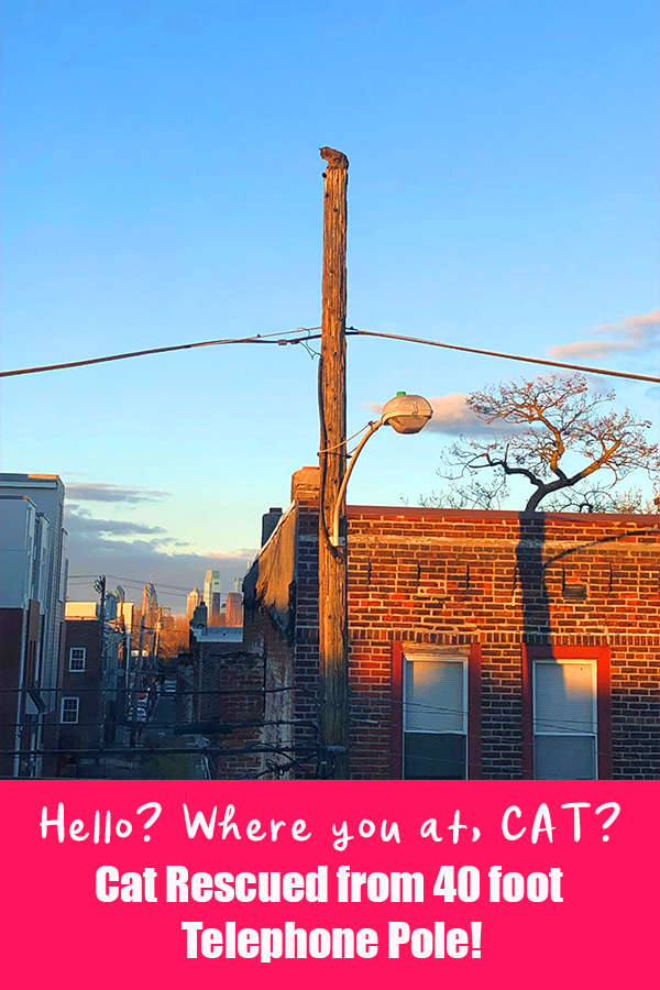 Help! Philadelphia Family Cat Stuck on 40 Foot Telephone Pole, Verizon Worker Hero Saves The Day