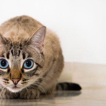 Sunshine Kitty Catfe