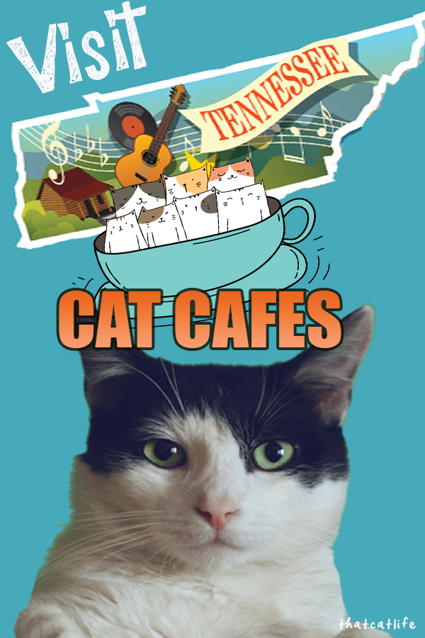 Tennessee Cat Cafes