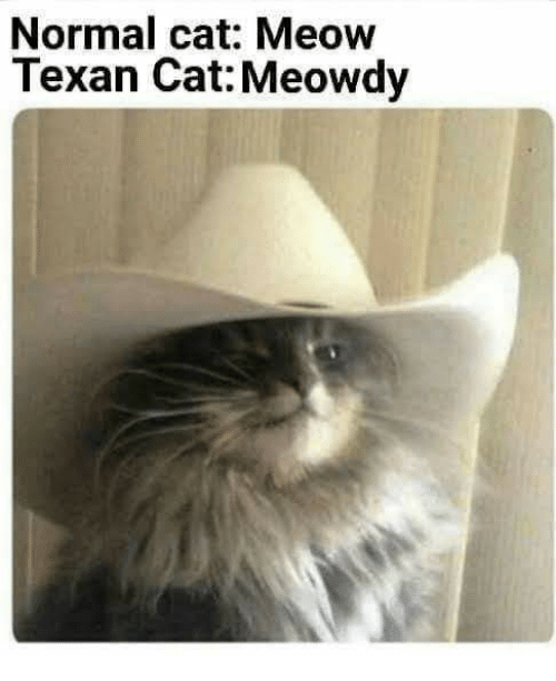 Texas Cat Cafe