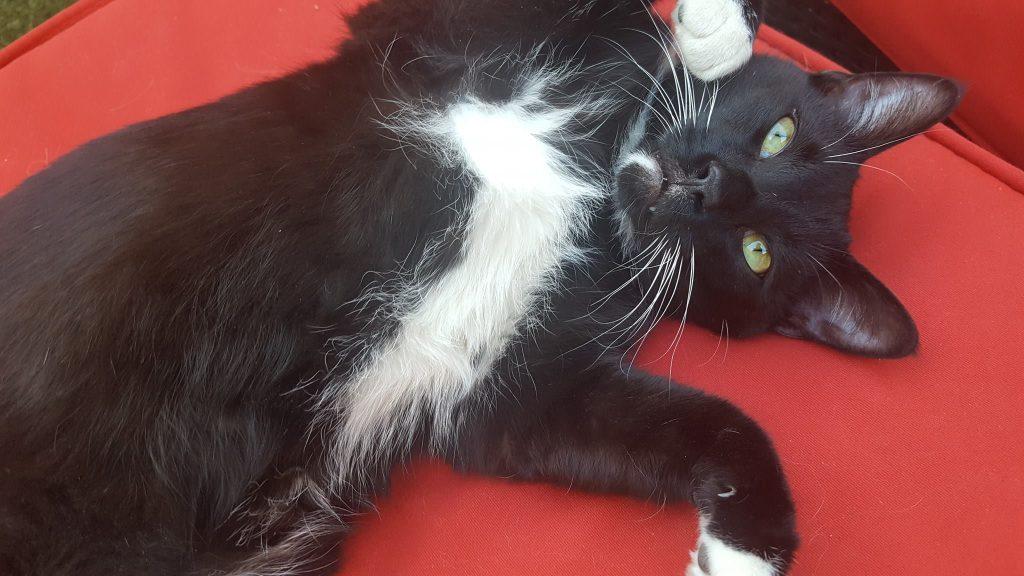 Tabby's Catfe Cat