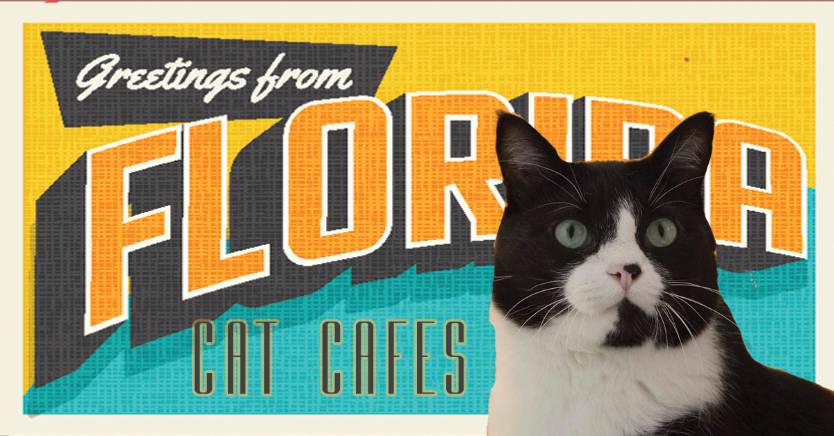 Florida Cat Cafes
