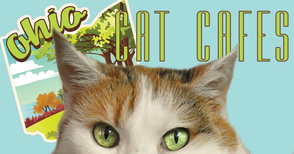 Ohio Cat Cafes