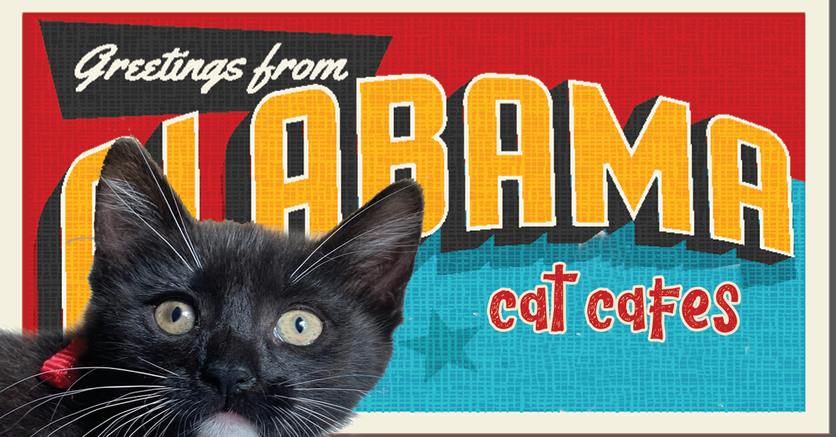Alabama Cat Cafes