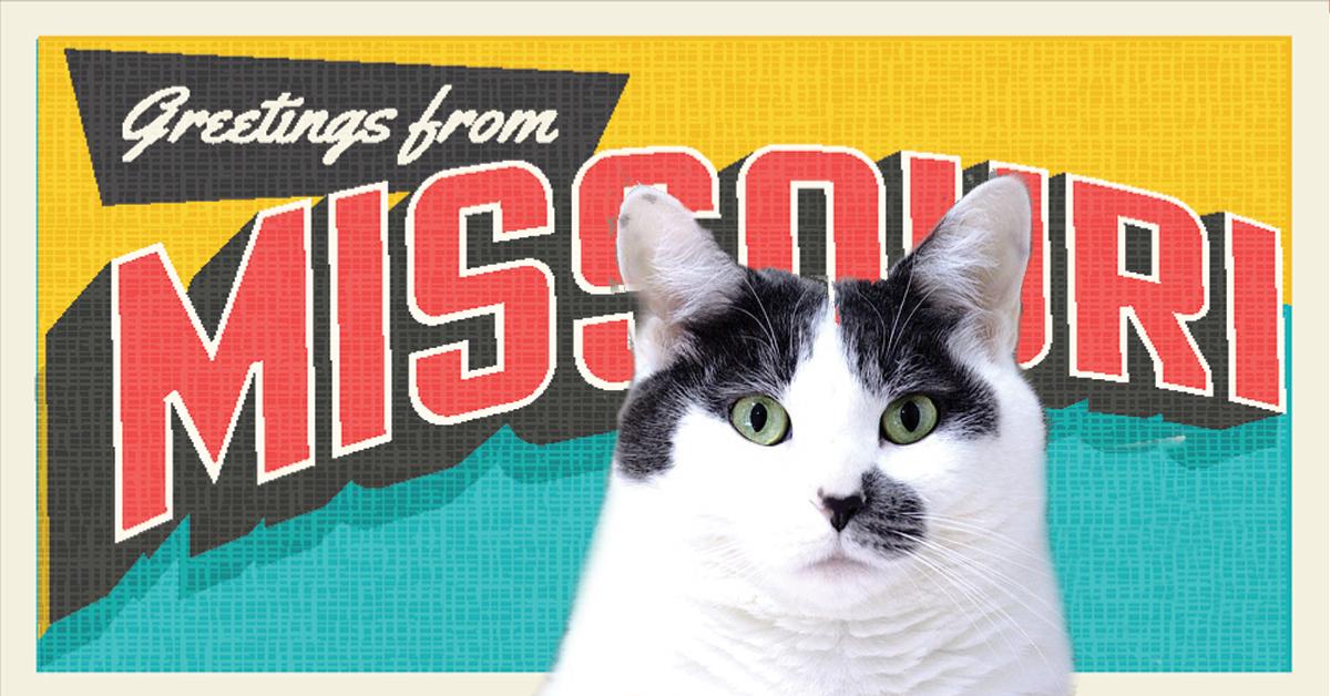 Missouri Cat Cafes