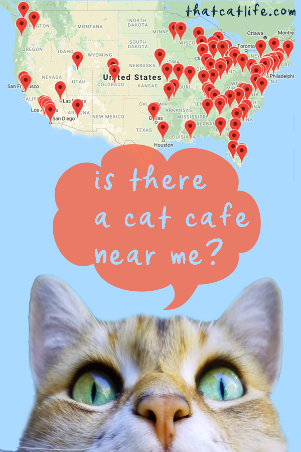 Cat Cafe Near Me