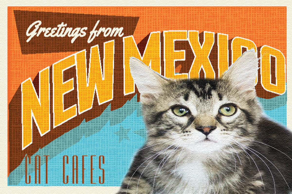 New Mexico Cat Cafe