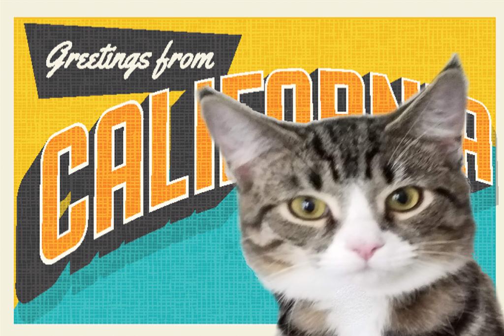 California Cat Cafes