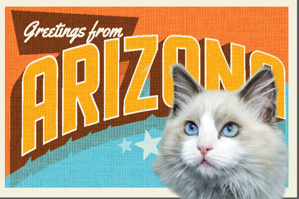 Arizona Cat Cafes