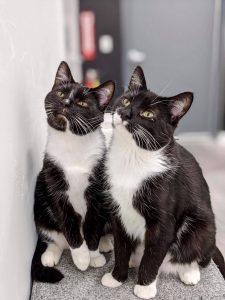 Pawfee Shop Cats
