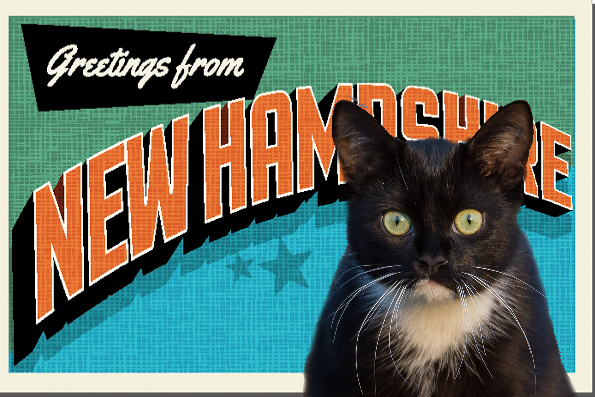 New Hampshire Cat Cafe