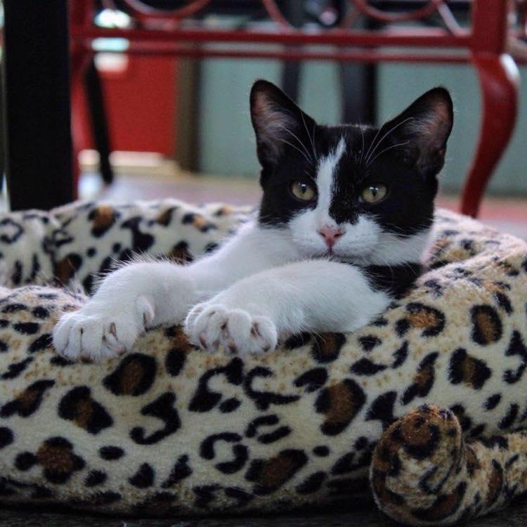 Gatos and Beans - A Cat Cafe