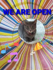 Catio Nashville is Open