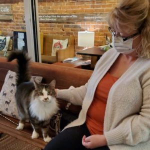 Cat Adoptions during Covid-19 closures River City Cat Cafe
