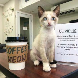 Hawai'i Cat Cafe