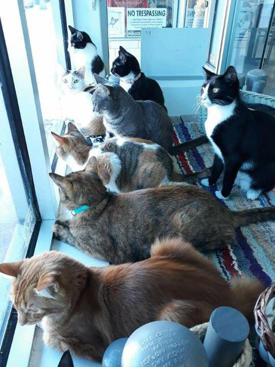 Cat Cafe South Beach