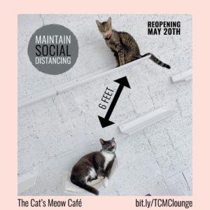 Cat's Meow Miami Open